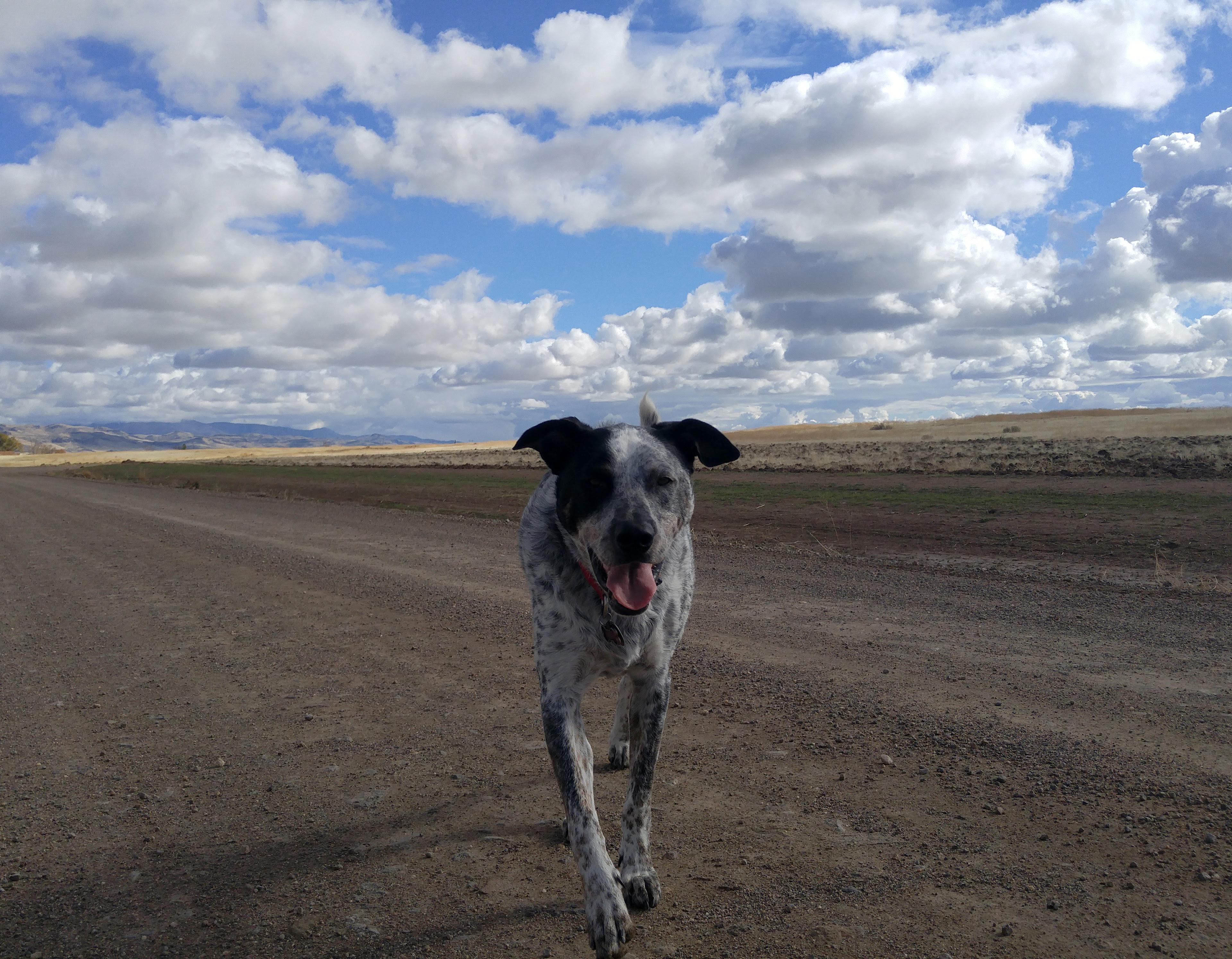 Blue Healer Idaho Dirt Road under Clouded Sky