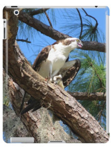 Osprey - Seahawk - iPad Case